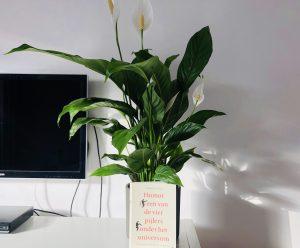 Boek-plant